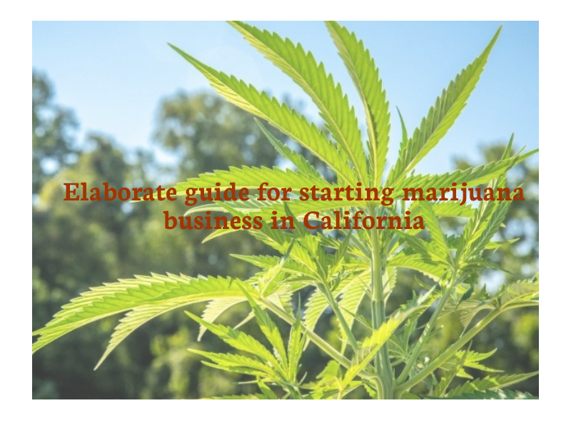 Elaborate guide for starting a marijuana business in California
